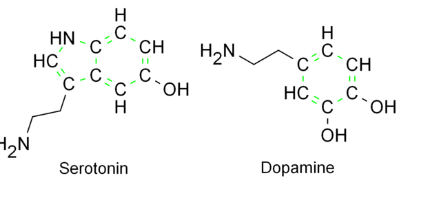 File:Monoamines, their structural similarities.png