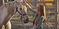 Divorce Horse