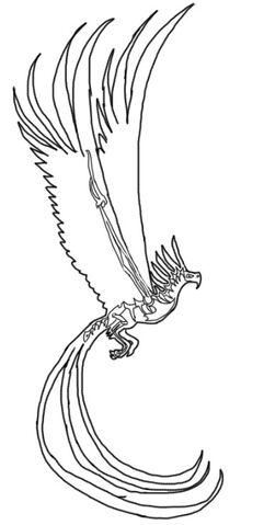 File:FyreAnatomy Skeletal .jpg