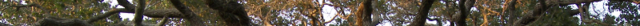 Archivo:Treeheader.png