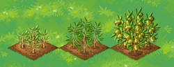 Farm-Olive 123
