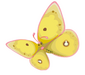 Danube Clouded Yellow