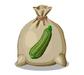 Zucchini Seed