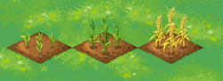 Farm-Wheat 123