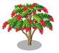 Ceibo Tree