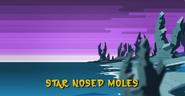 Star Nosed Moles 001