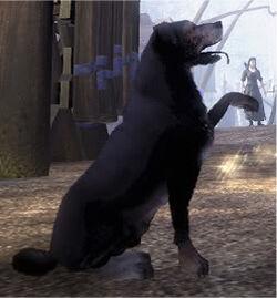 Fable 2 Dog