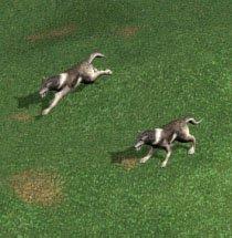 File:H4 wolves.jpg