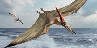 DW: Pteranodon
