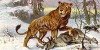 DW: Cave Lion