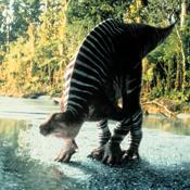 Iguanodon wwd