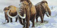 DW: Woolly Mammoth