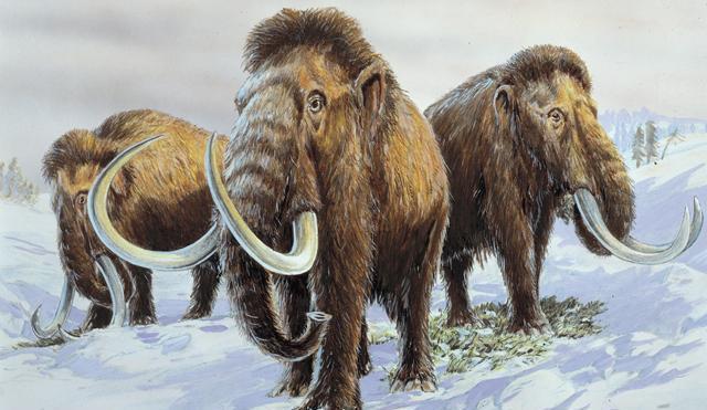 File:Mammoths.jpg