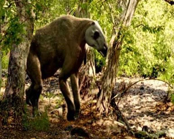 File:Chalicotherium.jpg
