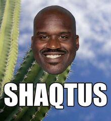 New Shaqtus