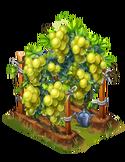 DE GrapeVine L5