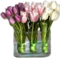 HO CandyS Tulips-icon