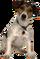 HO SkyPenth Dog-icon