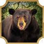 Share Bear With Me-feed