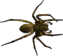 File:HO RomanyCamp Spider-icon.png