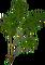 HO SwimPool Fern-icon