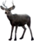 HO ConqC Deer-icon
