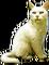 HO TitanicDeparture Cat-icon