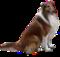 HO SwimPool Herding Dog-icon