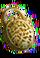 HO Hermitage Padlock-icon