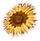 HO SkyPenth Sunflower-icon