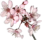 HO SEHunt Cherry Blossoms-icon