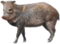 HO MTemple Peccary-icon