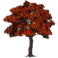 Marketplace Red Maple Tree-icon