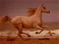 HO SeanceP Horse-icon