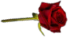 File:HO Long Cold Night Rose-icon.png