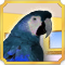 Quest Find Parrot-icon