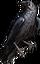 HO FPicnic Raven-icon
