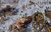 Scene Russian Front-icon