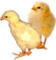 HO SEHunt Chicks-icon
