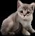 HO MidnightTrain Kitten-icon