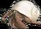 HO Beach Hermit Crab-icon