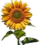 HO SecTreeh Sunflower-icon