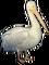 HO TitanicSunDeck Pelican-icon