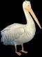 File:HO TitanicSunDeck Pelican-icon.png