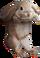 HO CurioS Rabbit-icon