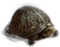 HO ConqC Turtle-icon