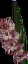 HO COffice Gladiolus-icon
