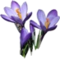 HO SEHunt Crocuses-icon