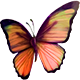 Quest Task Butterfly-icon