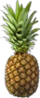 HO FPicnic Pineapple-icon